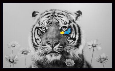 SN, 'Tiger ', 2020