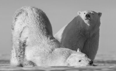 David Yarrow, 'Monday Morning', 2016