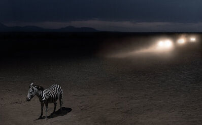 Nick Brandt, 'Zebra with Headlights', 2018