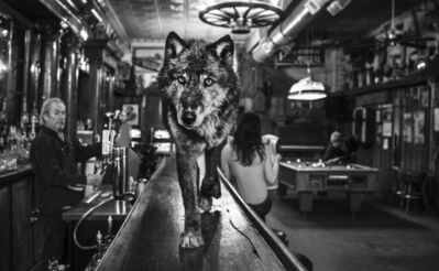 David Yarrow, 'The Wolf  Of Main St II', 2015