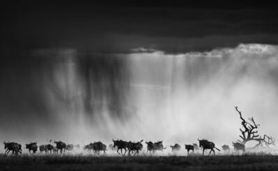 David Yarrow, 'Exodus', 2015