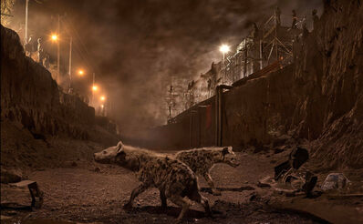 Nick Brandt, 'River Bed with Hyenas', 2015