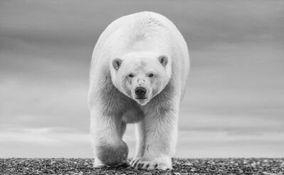 David Yarrow, 'The North Slope', 2018