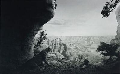 Hiroshi Sugimoto, 'Mountain Lion (#109)', 1980