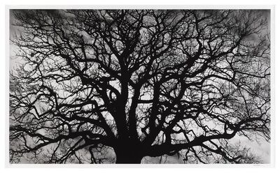 Robert Longo, 'Untitled (Tree)', 2018