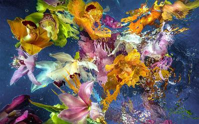 Allan Forsyth, 'Aqua Flora 6', 2016