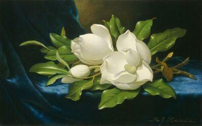 Martin Johnson Heade, 'Giant Magnolias on a Blue Velvet Cloth', ca. 1890