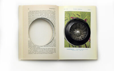Sondra Sherman, 'Found Subjects: Geschutzte Pflanzen, Brooch'