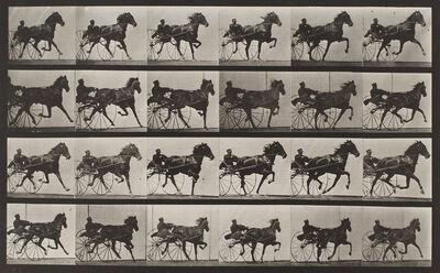 "Eadweard Muybridge, 'Plate 613, Animal Locomotion: ""Nellie Rose"" trotting, harnessed to sulky', 1872-1885 / printed 1887"