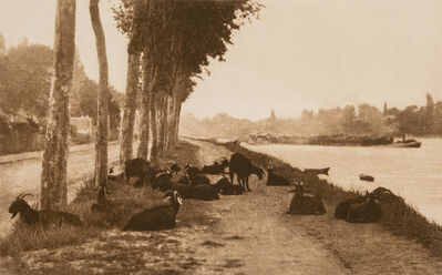 Alfred Stieglitz, 'Pastoral Landscape with Goats (On the Seine, Near Paris)', 1897