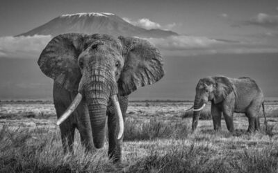 David Yarrow, 'The Witness', 2020