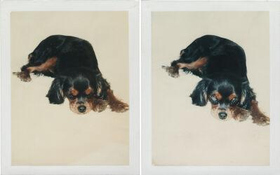 Andy Warhol, 'Dog', 1976
