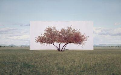 Myoung Ho Lee, 'Tree...#2', 2011