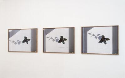 Liddy Scheffknecht, 'Ceci n'est pas une plante', 2014