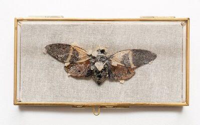 Tyler Thrasher, 'Crystallized cicada #1', 2018