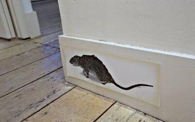 Christy Rupp, 'Rat patrol', ca. 1980