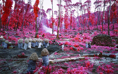 Richard Mosse, 'Hunches in Bunches', 2011