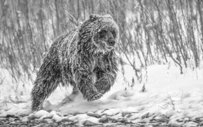 Paul Nicklen, 'Cold Pursuit', 2010