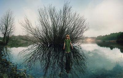 Ellen Kooi, 'Oosterplas – wilg (willow)', 2012