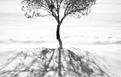 Abbas Kiarostami, 'Snow No. 2', 2002