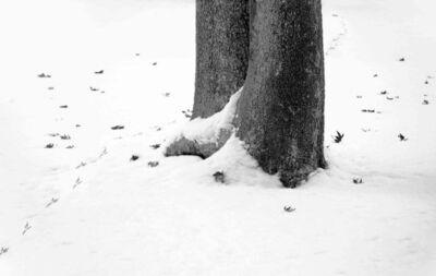 Abbas Kiarostami, 'Snow No. 1', 2002