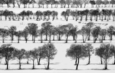 Abbas Kiarostami, 'Snow No. 44', 2002
