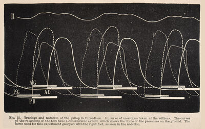 Étienne-Jules Marey, 'Fig. 55: Tracings and notation of the gallop in three-time ...', 1874