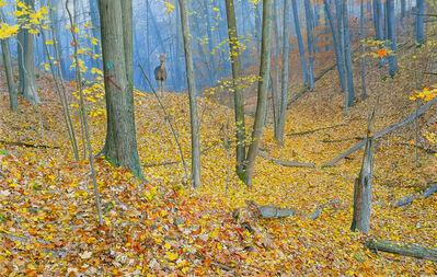 Rick Pas, 'October Woods', 2019