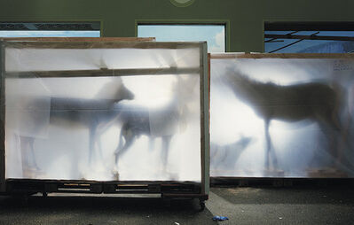 Richard Barnes, 'Backlit Hoofed Animals', 2005