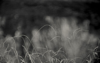 Tomio Seike, 'Waterscape #35', 2008