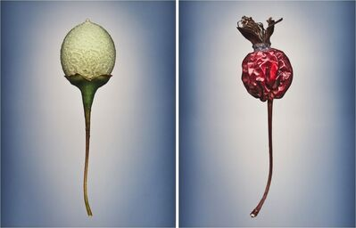 Svjetlana Tepavcevic, 'Means of Reproduction no. 711 & 2021'