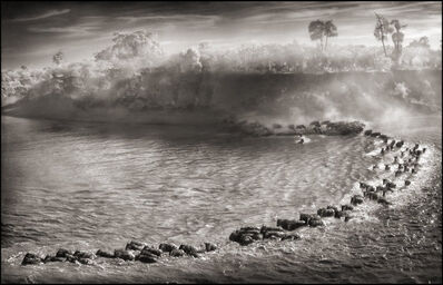 Nick Brandt, 'Wildebeest Arc', 2006