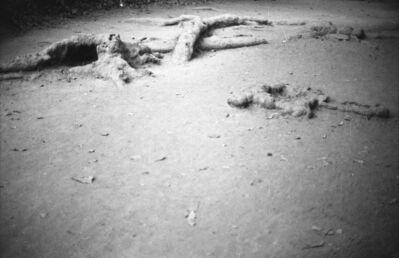 Anri Sala, 'Untitled (roots) ', 2005