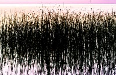 Bill Jackson, 'Wrought Iron Reeds', 2015