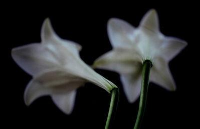 Thomas Florschuetz, 'Lilien (Lillies | Flowers)', 2000