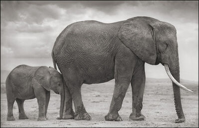 Nick Brandt, 'Elephant Mother & Baby at Leg, Amboseli', 2012