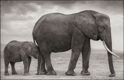 Nick Brandt, 'Elephant Mother with Baby at Leg', 2012