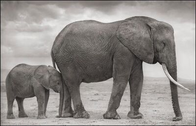 Nick Brandt, 'Elephant Mother with Baby at Leg, Amboseli', 2012
