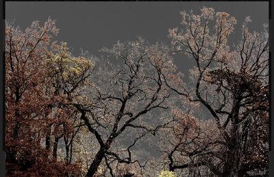 Arman, 'N°23, Dark Trees series (Ed. 2/4 + 1AP)', 2018