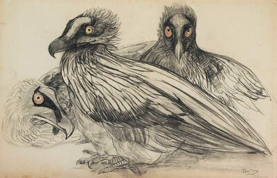 Theo van Hoytema, 'Young bearded vultures', ca. 1899