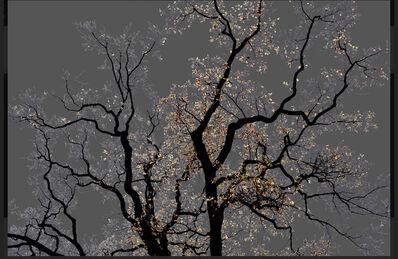 Arman, 'N°15F,  Dark Trees series (Ed. 3/3 + 1 AP)', 2016