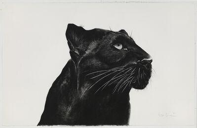 Rose Corcoran, 'Black Panther Looking Away'