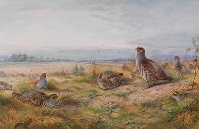 David Kristupas, 'Autumn Partridge in Early Morning ', Active Contemporary