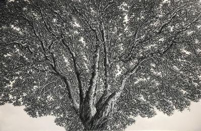 Ellen Wagener, 'Enlightenment Tree 1', 2020