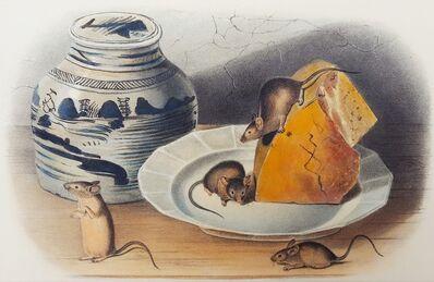 John James Audubon, 'Common Mouse', 1849-1854