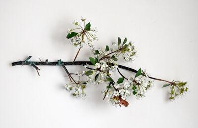 Carmen Almon, 'Hanging Pear Blossom Branch with Linnaeus Moth', 2019