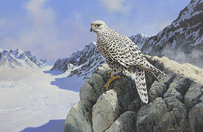 Adrian C. Rigby, 'Untitled - Raptor in Alpine Winter'