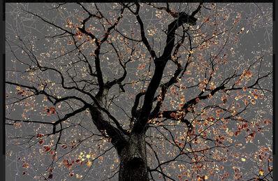 Arman, 'N°25, Dark Trees series (Ed. 1/3 + 1 AP)', 2018