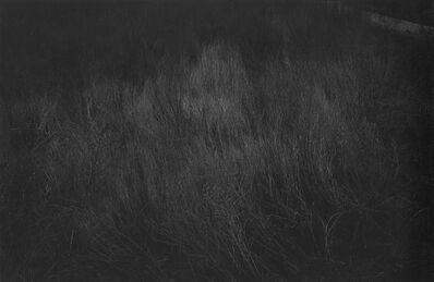 Myung Duck Joo, 'Branch', 1997