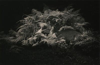 Yamamoto Masao, '1562 from Kawa=Flow'